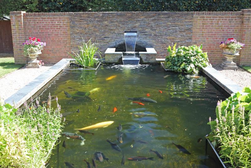 garden pond with koi fish and goldfish
